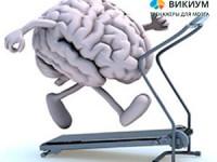 Тренировка мозга каждый день с Викиумом