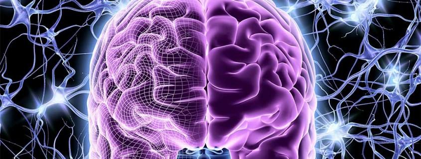 brain-845x321