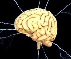 brain-1845940_640_240x200